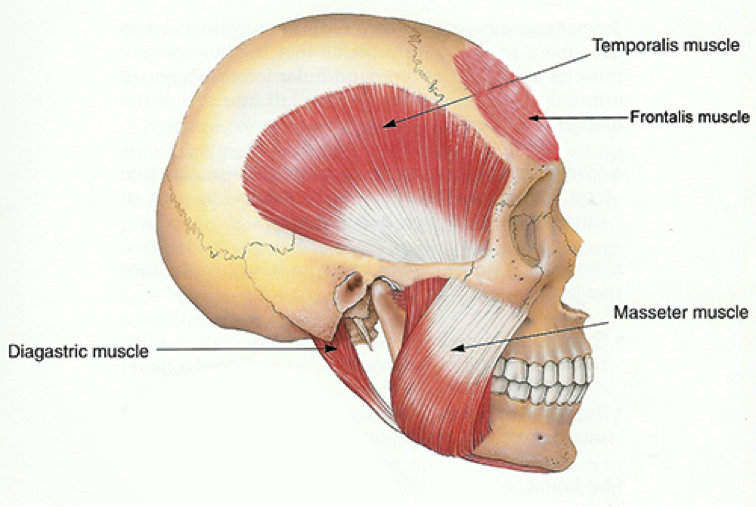 Tmj General Information Oral Surgery Calgary Touchan Oral